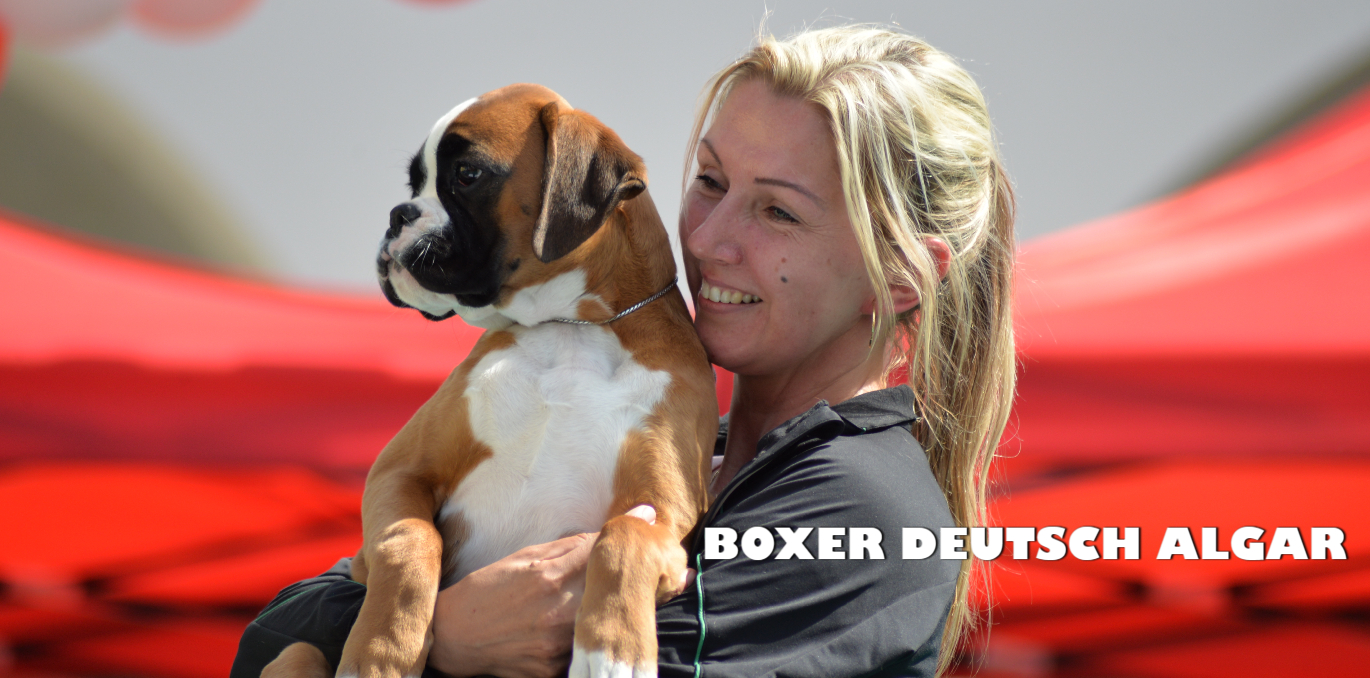 BOXER DEUTSCH ALGAR